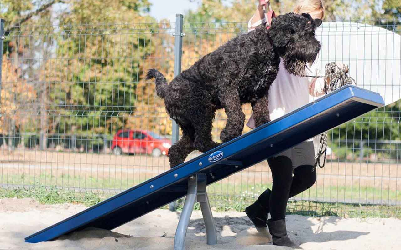 BALANCE BEAM - BALANCE BEAM - AGILITY DOG