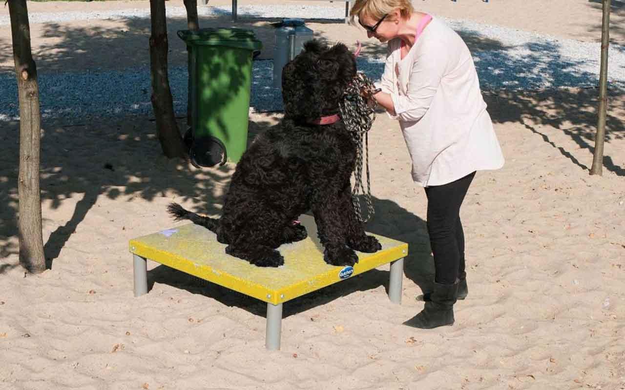 PLATFORM - PLATFORM - AGILITY DOG