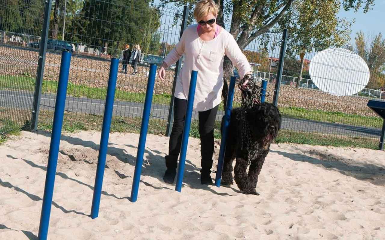 SLALOM - SLALOM - AGILITY DOG